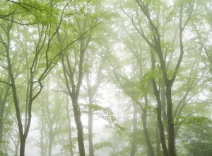 Mist Hanging in a Forest